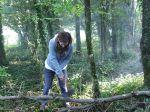 Liz snedding an ash tree